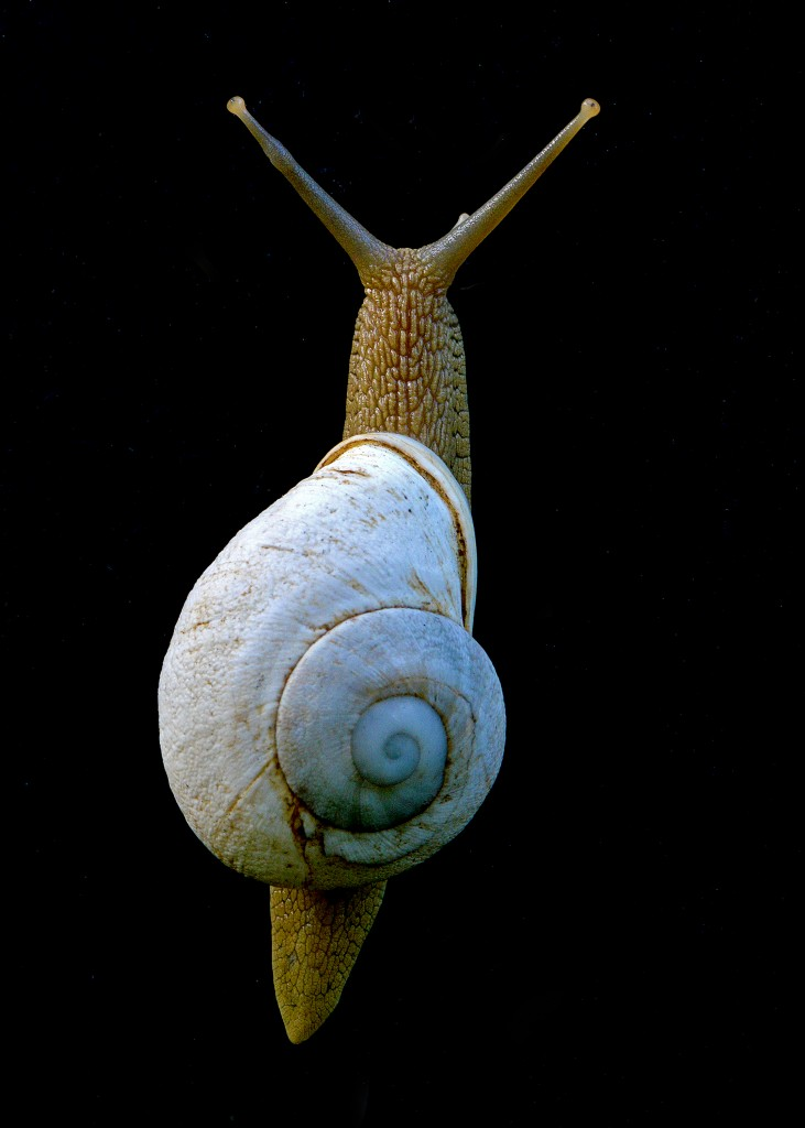 Land snail, Cockpit Country, Jamaica, by Ted Lee Eubanks