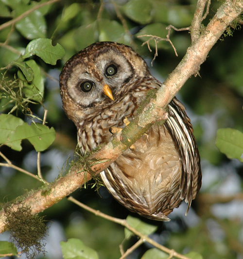 Home English Blog: Are You a Night Owl?