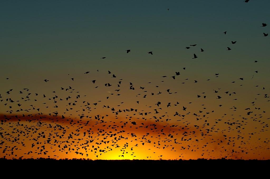 Quivira Sunset (2); Quivira NWR, KS; 14 October 2005