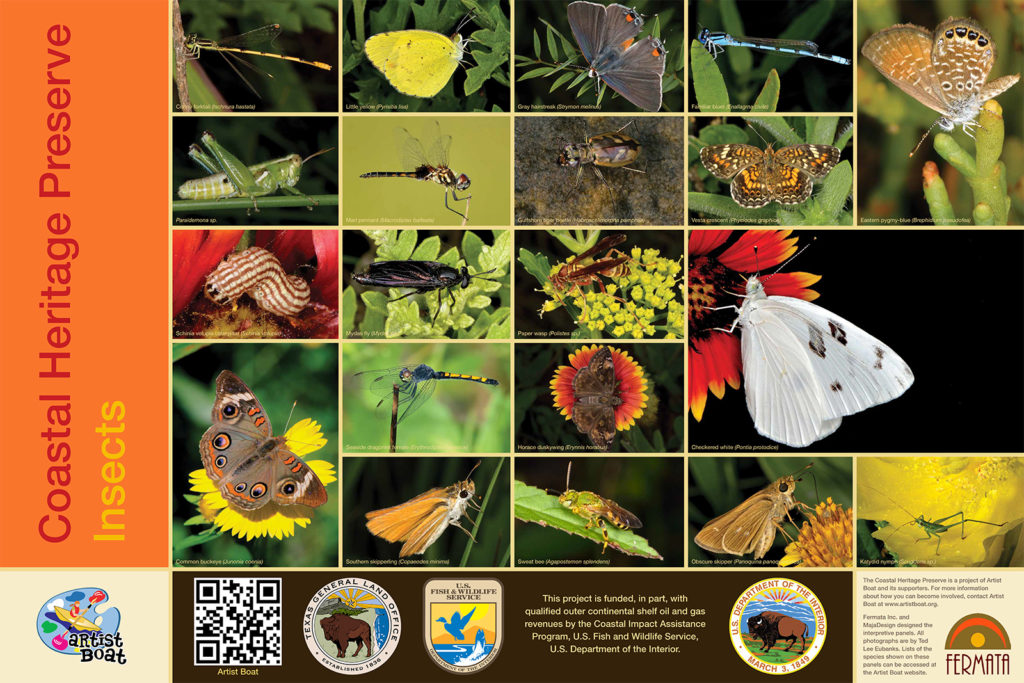 Coastal Heritage Preserve Insects by Ted Lee Eubanks